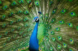 Essay on Visit to a Wildlife Park